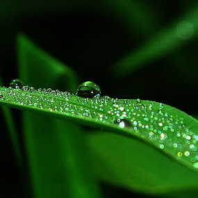 Buble by Arief Tisnadi Wasono - Abstract Water Drops & Splashes
