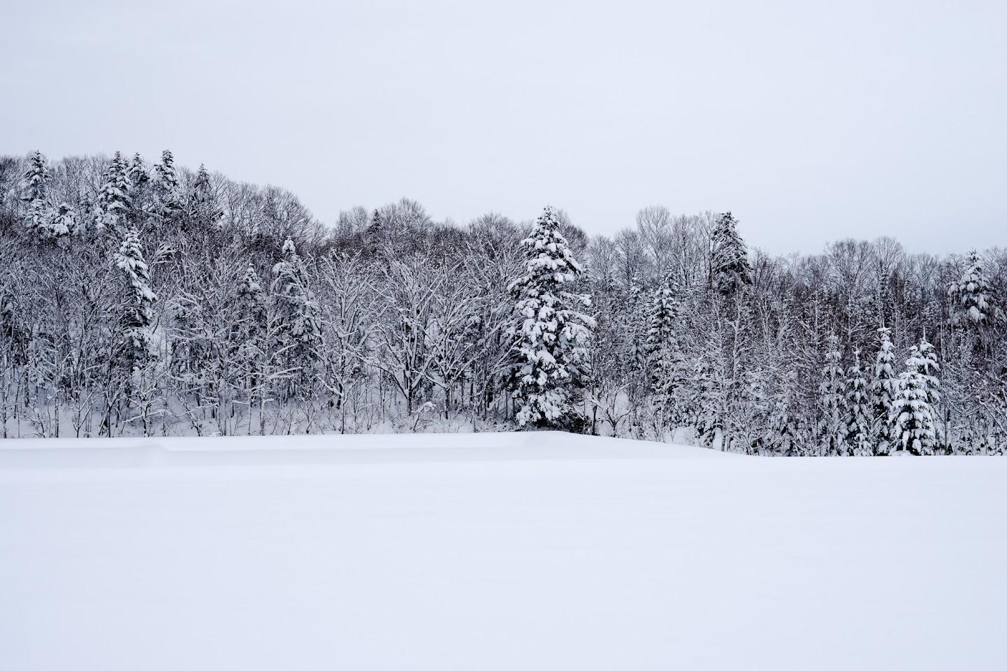 グレー&ホワイトの雪景色