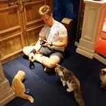 Cat Cafe Mocha in Harajuku, Tokyo in Tokyo, Tokyo, Japan