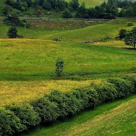 My  green  valley by Gordon Simpson - Landscapes Prairies, Meadows & Fields