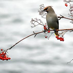 by Deanna Clark - Animals Birds (  )