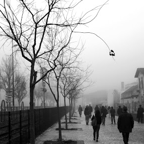 Modern days zombies by Carlos Cardoso - City,  Street & Park  Street Scenes ( modern, b&w, days, zombies )