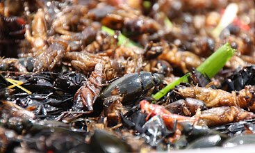Photo: Year 2 Day 46 - Fried Crickets and Beetles