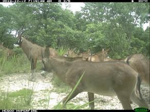 Photo: But lots of roan offspring this year! Mas muitas crias de PV este ano!