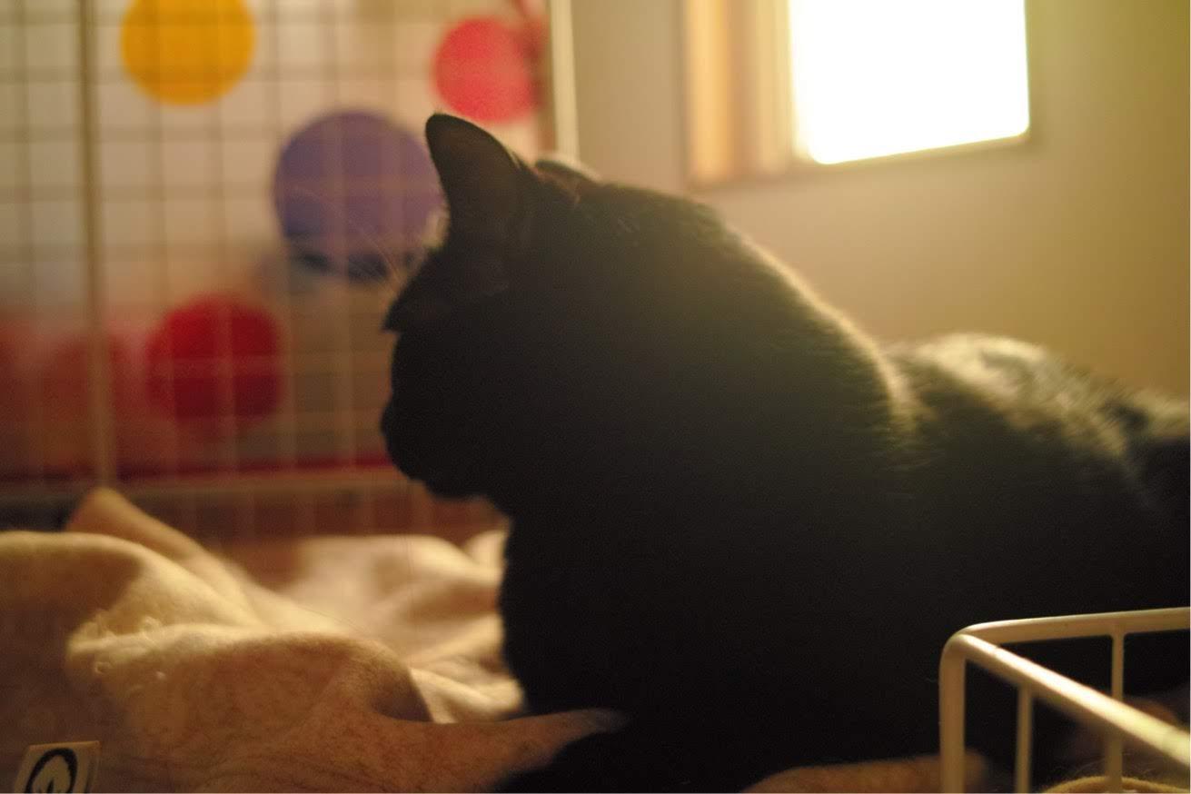 猫、ねこ、ヨン、ノスタルジック、白黒写真、DP2
