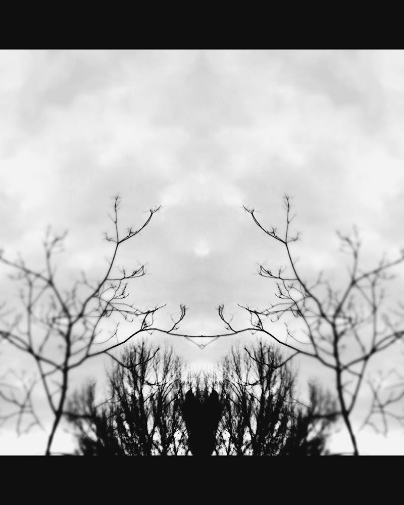 il volto della simmetria  di air_flavia