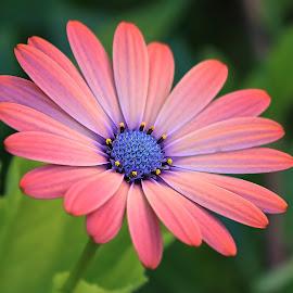 Flower 845~ by Raphael RaCcoon - Flowers Single Flower