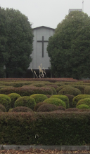 Photo: ススキ(2013/12 ICU教会)