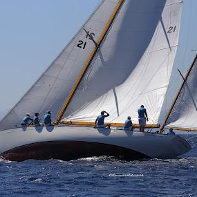 Classic Regatta by Alessandra Antonini - Sports & Fitness Watersports ( classicboats, watersport, sailing, summer, sea, sailingboat, regatta, daylight, sun )