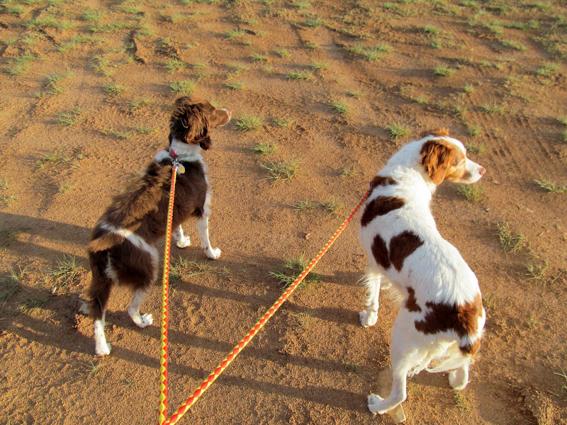 Photo: Walking the dogs