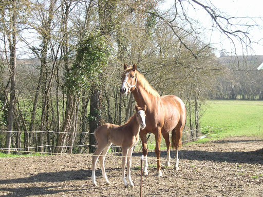 Garde de chevaux Gers