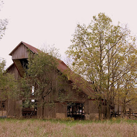 Barn in Kansas by Sean Williams - Buildings & Architecture Decaying & Abandoned ( farm, field, building, barn, autumn )