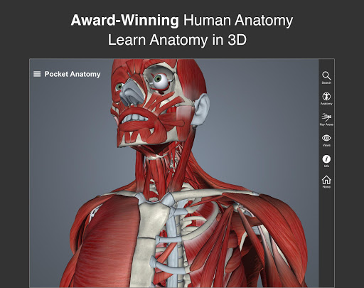 Pocket Anatomy app for Android screenshot