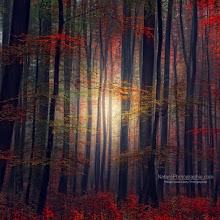 """Photo: Hi dear friends,  """"Last Glance of Fall"""" new photo in the Fall album.  REMINDER Best of Autumn 2011 - The ebook : http://www.naturephotographie.com/best-of-automne-2011/ Best of Landscape Photographers (for inspiration) : http://www.naturephotographie.com/photographes-du-monde/ Orton effect : http://www.naturephotographie.com/effet-orton/  Cheers - and thanks for your support here on G+ Have a nice weekend :)"""