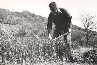 Photo: Julián, uno de los mejores segadores que tuvo Serdio.