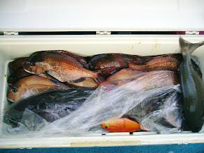 Photo: こちらは新垣さんの釣果! 真鯛11枚とオナガでした!