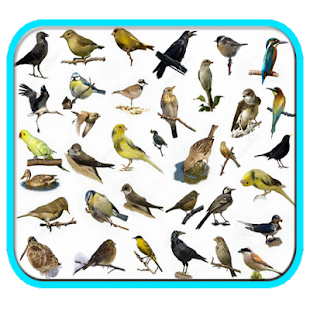 Cantos dos Pássaros Completos - náhled