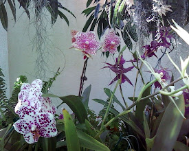 Photo: Couldn't get enough orchid photos...
