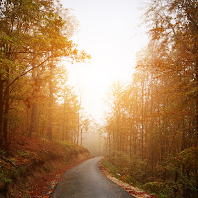 Road to nowhere. by Denis Klicic - Landscapes Forests ( fog, autumn, colors, trees, forest, road, sun )
