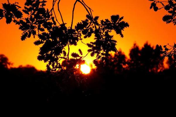 Orange...in the light of sunset. di elenabussotti
