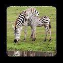 Zebra Wallpapers icon