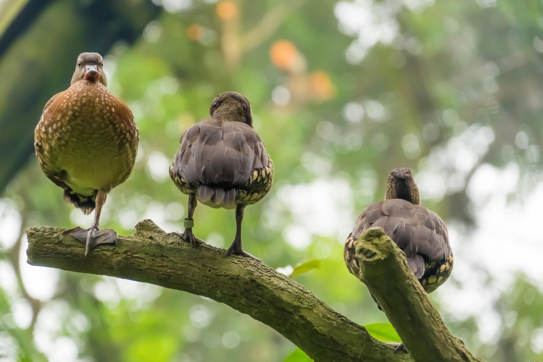 シンガポール動物園 フラジャイル・フォレスト