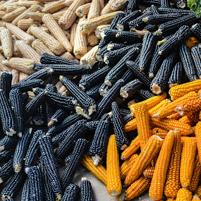 3 color by Luis Albanes - Food & Drink Ingredients ( orange, color, food, agriculture, white, guatemala, corn, black, tecpan )