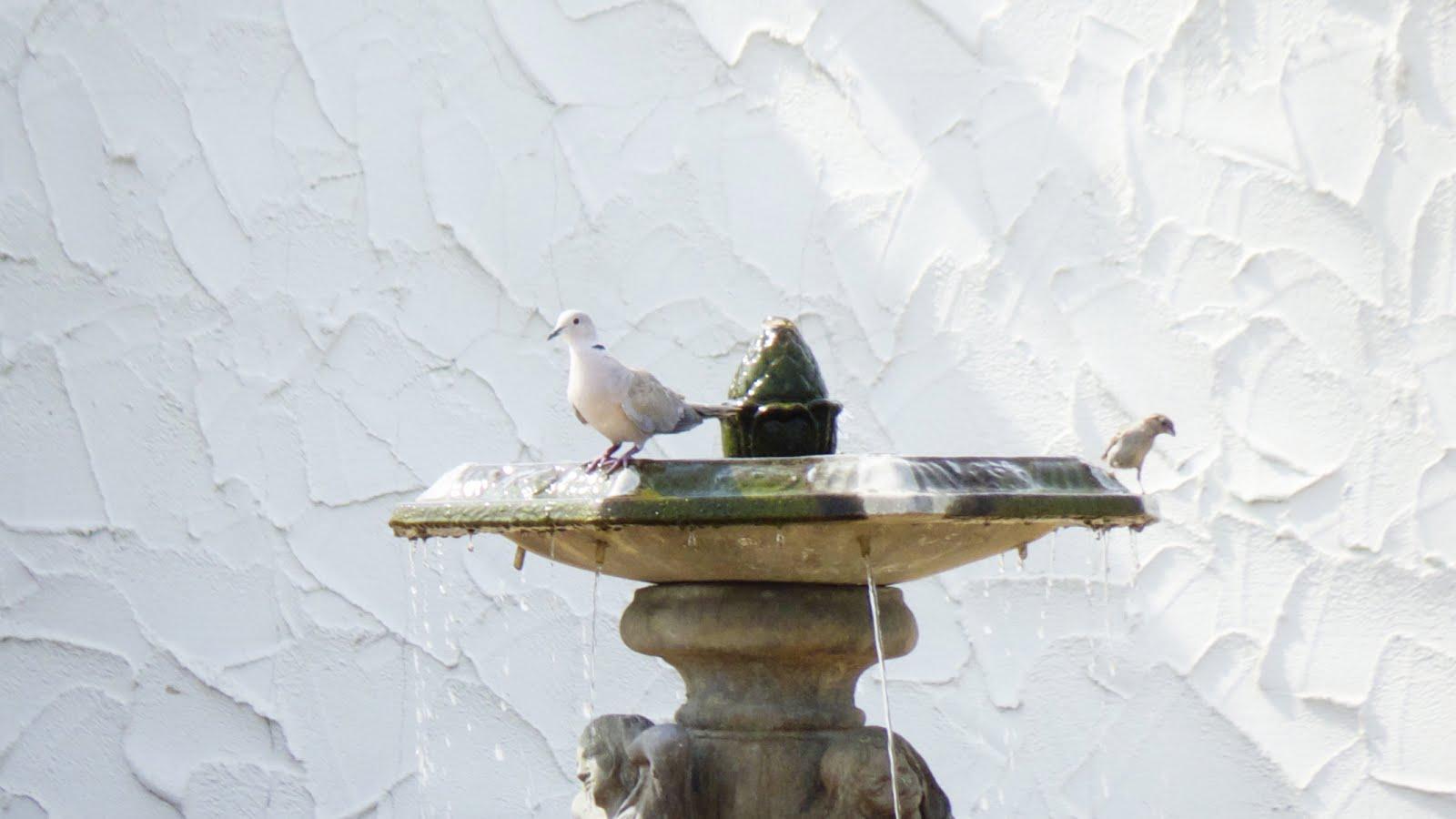 Watering Spot.jpg