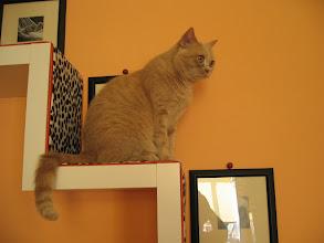 Photo: der Knabe hat keine Ahnung, was schön ist (Katzenzimmer)
