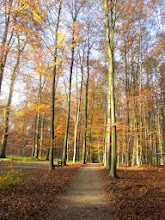 Photo: schitterend loofbos