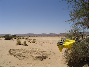 Photo: Phoenix flag tried to escape