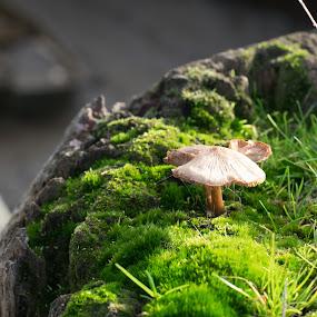 by Paul Foot - Nature Up Close Mushrooms & Fungi (  )
