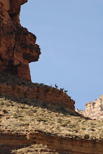 Photo: Big Horn's on the cliffs