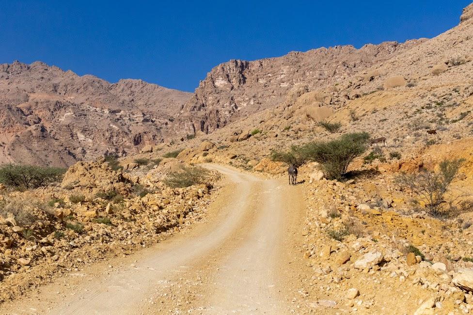 Salma Plateau, Oman