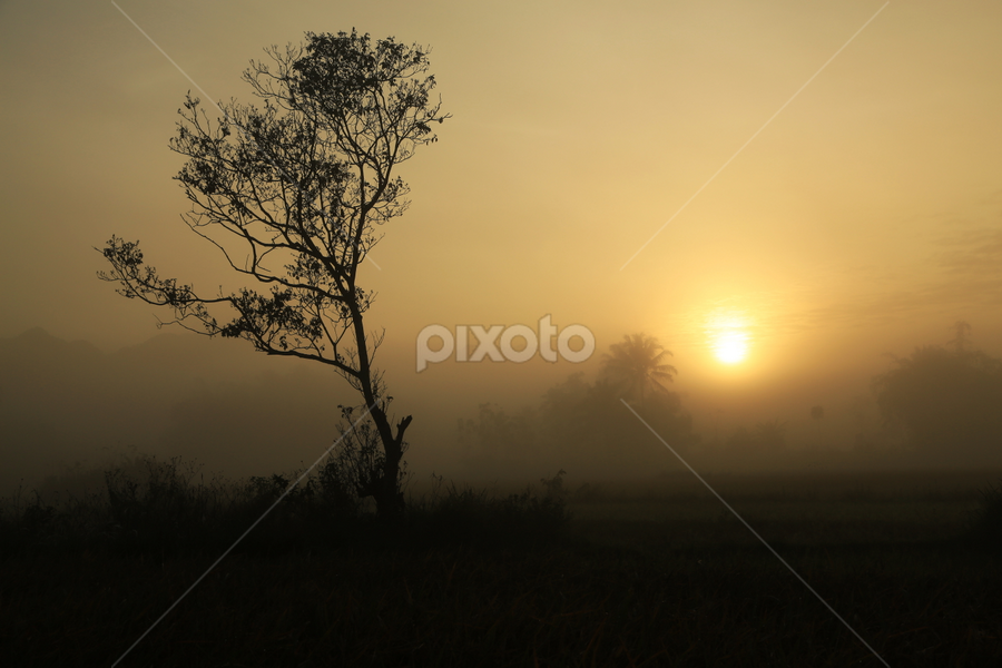 Tree in Gold by Adi Krishna - Landscapes Sunsets & Sunrises