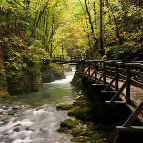 Autumn by Gordana Kvajo - Nature Up Close Water ( autumn, croatia, river )