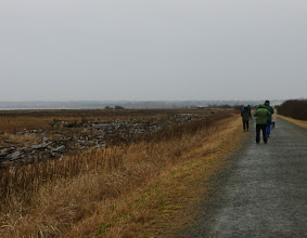 Photo: How many Snowy Owls can you count in this photo from Boundary Bay, B.C.?
