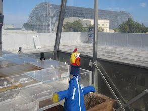 Photo: Miss Camilla with the bacterial culture mats, and an interesting view of Hangar One, recently stripped, from the roof of the Life Science building...