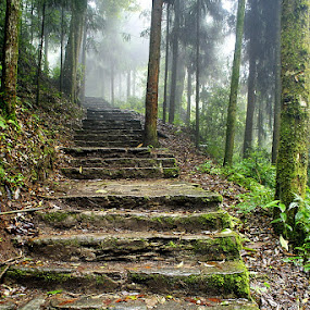The mystic destination  by Sayan Bhattacharya - Landscapes Forests ( forests, nature, travel )