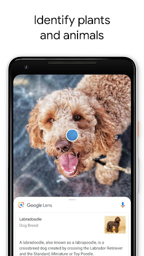 Google Lens 1.0.180517224 screenshots 3