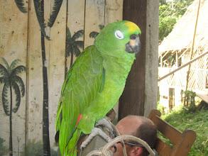 Photo: Sassy parrot