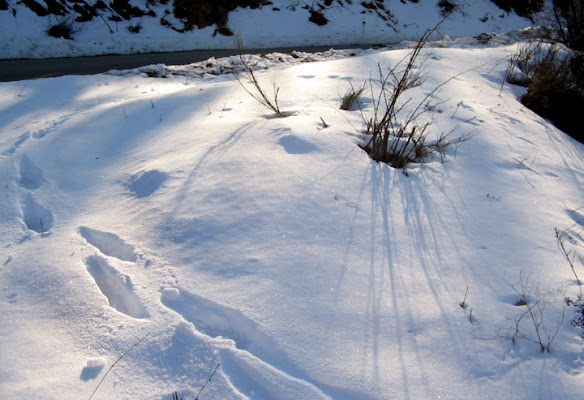Morbida Neve di IlariaInnocenti
