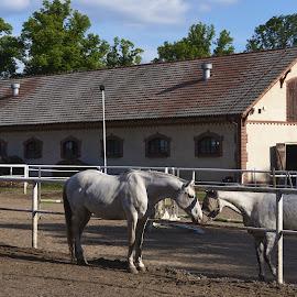 03. Stadnina w Wąsowie - rodzinne spotkanie by Marek Rosiński - Animals Horses ( mare, foal, stable, beauty in nature, horses )