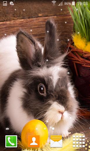 Rabbit Live Wallpapers  screenshots 3
