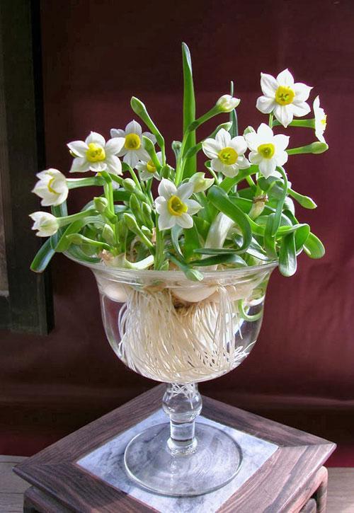 Ảnh có chứa bàn, hoa, bình, trong nhà  Mô tả được tạo tự động