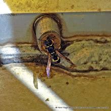 Photo: Es handelt sich um eine Wespe