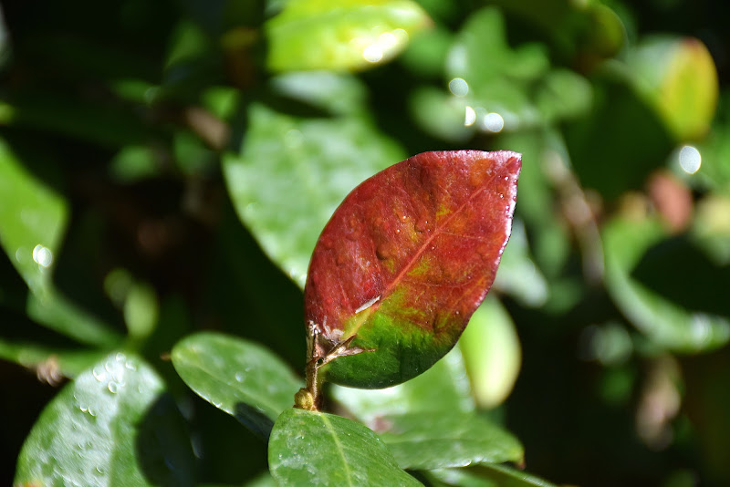 Wet Leaf di MattiaMorganti