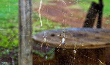 Photo: Killer face spider