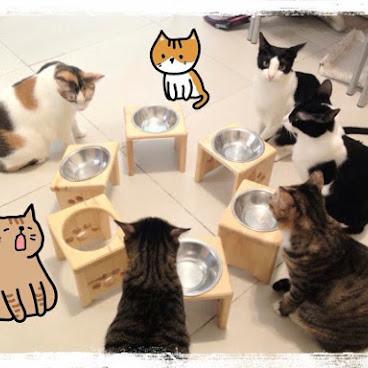 單碗寵物餐桌