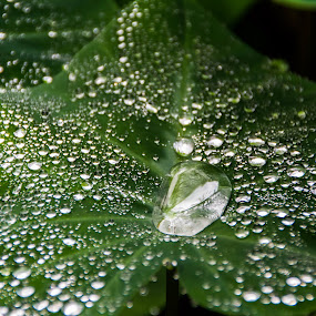 Nature's Beauty by Callie Black - Nature Up Close Leaves & Grasses ( nature, green, water on leaf, leaves, water droplets,  )